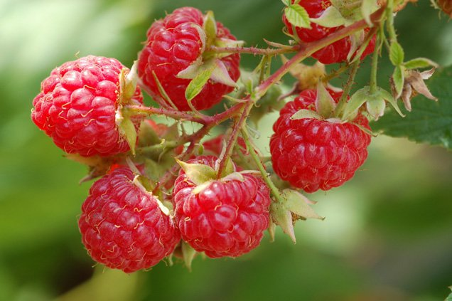 Image result for Raspberry